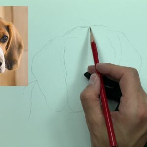 How to Draw a Beagle   Step by Step